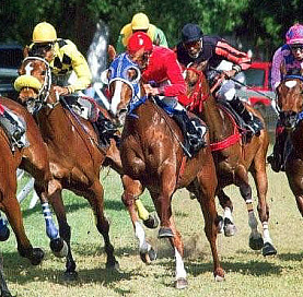 horse racing in barbados at the garrison
