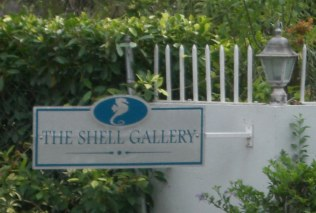 the shell gallery gibbs st peter barbados